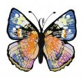Gorgeous butterfly 3 embroidery design