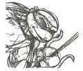 Raphael sketch embroidery design