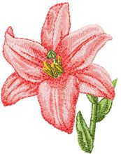 Small Red Lily