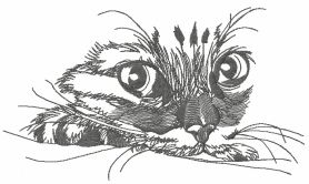 Curious cat 5 machine embroidery design