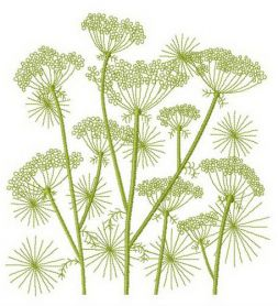 Cow parsnip machine embroidery design