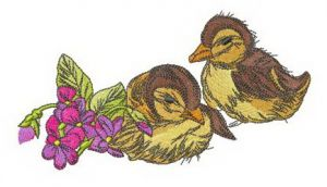 Ducklings with violets