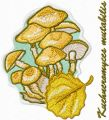 Kuehneromyces mutabilis embroidery design
