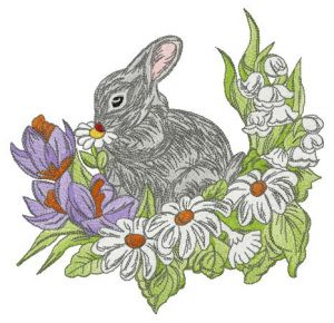 Rabbit on glade