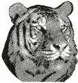 Tiger photo stitch free embroidery design