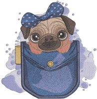 Pug in pocket