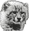 Snow Leopard free machine embroidery design