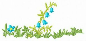 Blue bellflower