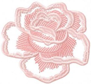 Light pink rose 5