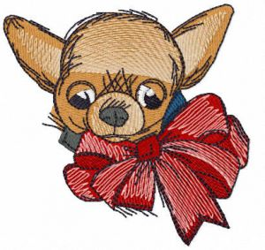 Chihuahua with bow